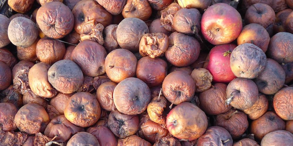 rotten fruit, coolroom maintenance needed